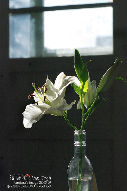 2015.11.08-白百合水晶.jpg