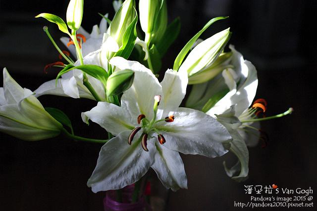 2015.11.08-白百合水晶-6.jpg