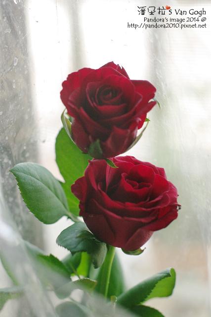 NO.028#001-紅玫瑰1號.jpg
