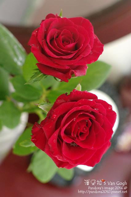 NO.028#001-紅玫瑰1號-4.jpg