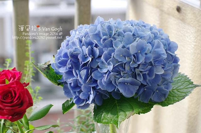 NO.028#004-藍繡球1號.jpg