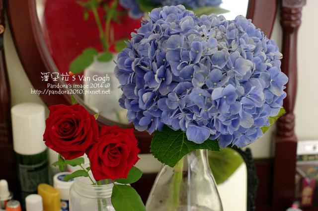 NO.028#004-藍繡球1號-4.jpg