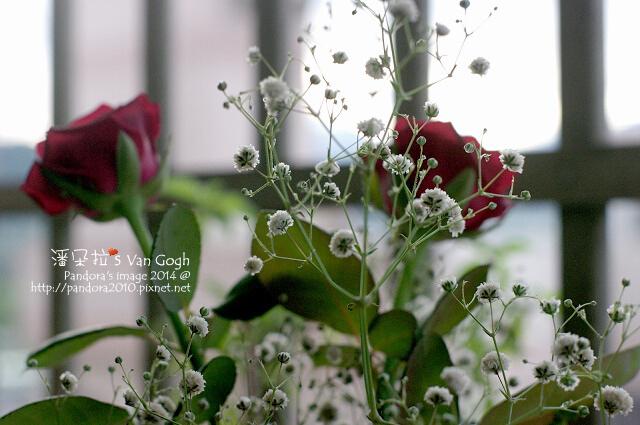 NO.028#006、007-紅玫瑰3號、滿天星-2.jpg