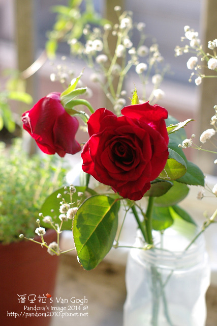 NO.028#006、007-紅玫瑰3號、滿天星-4.jpg