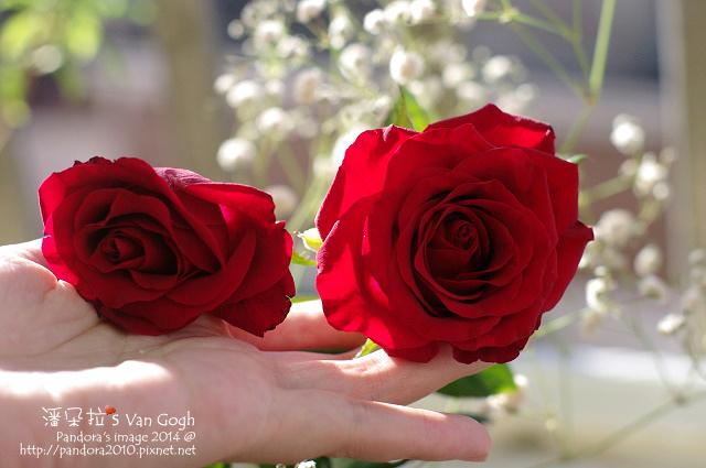 NO.028#006、007-紅玫瑰3號、滿天星-7.jpg