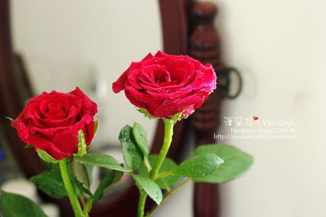 NO.028#008-紅玫瑰4號-2.jpg