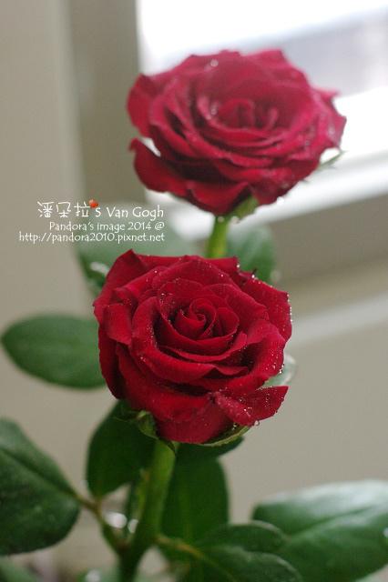 NO.028#008-紅玫瑰4號-3.jpg