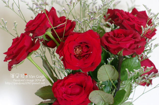 NO.028#009、010-卡斯比亞、紅玫瑰5號-4.jpg