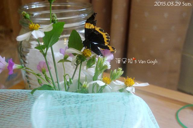 2015.03.29-阿福4.jpg