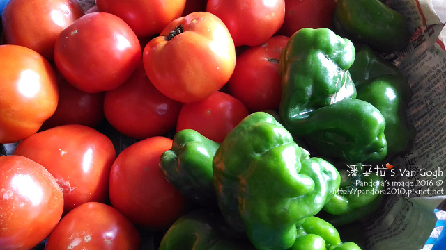 2016.07.31-番茄、青椒.jpg