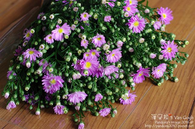 2016.11.18-紫孔雀花-紫苑.jpg