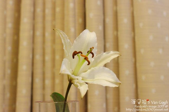2017.02.28-粉百合。馬可波羅.jpg