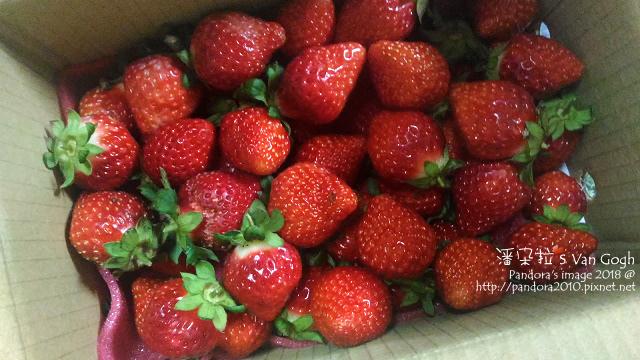2018.01.27-大湖草莓.jpg
