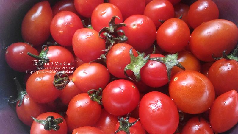2018.04.03-小番茄-.jpg