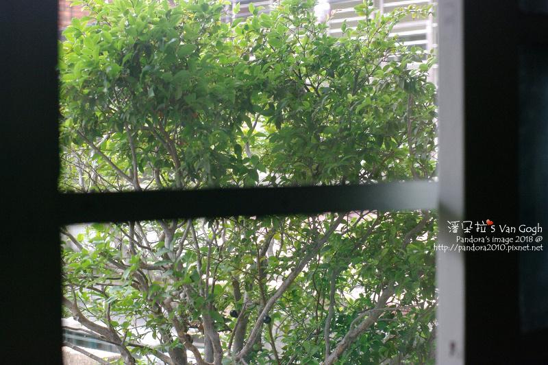 2018.05.20-樹葡萄、綠繡眼.jpg
