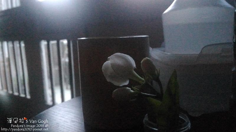 2018.06.22-茉莉花.jpg