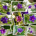 2019.08.03-紫獅子.jpg