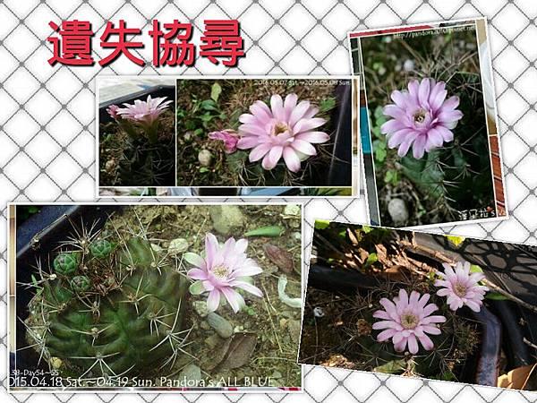 2019.03.23-仙人掌遺失協尋.jpg