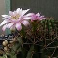 2019.04.23-仙人掌花#01-Day02、#02-Day01-5.jpg