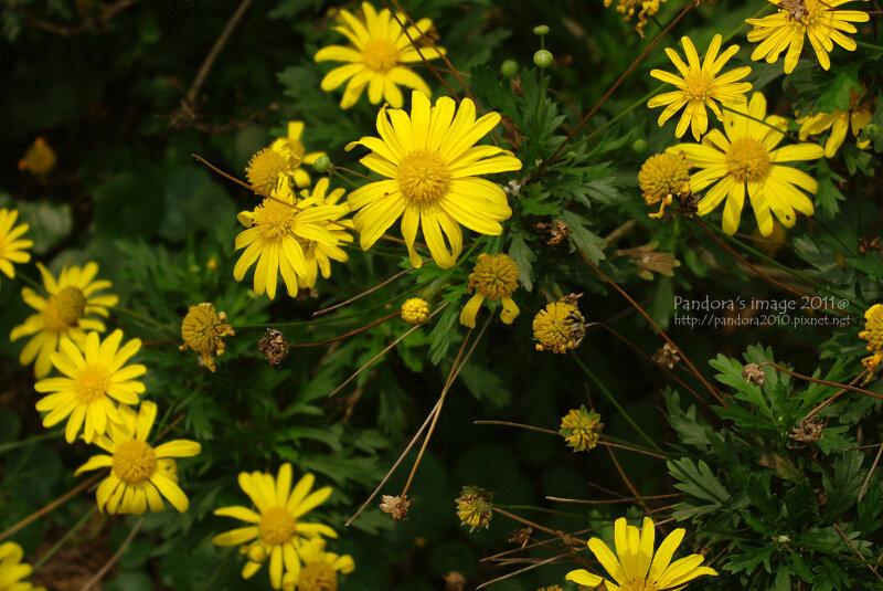 花葬區的小花