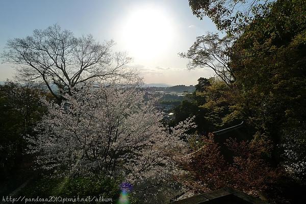 2010春。日本賞櫻