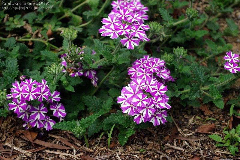 特殊別緻的小花