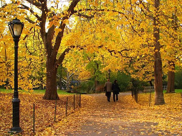 中央公園秋日小徑