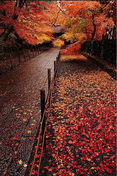 楓紅深處.jpg