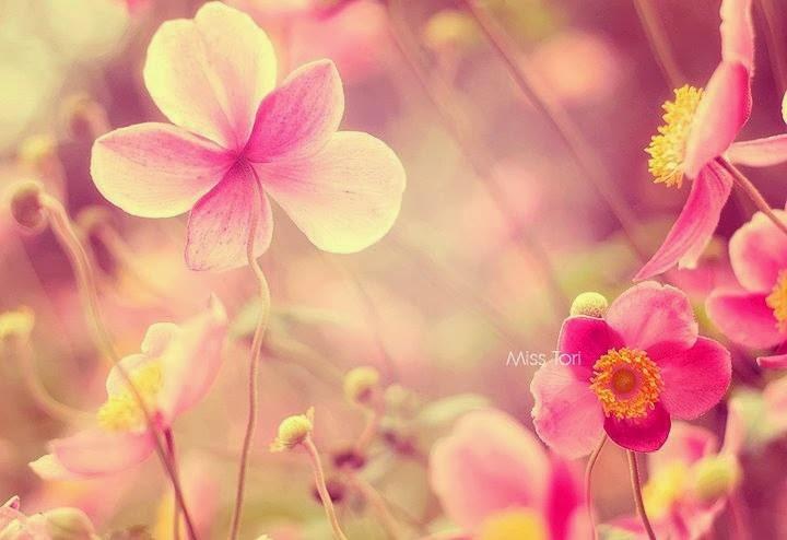 flower061_20131102_chada nour