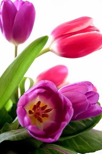 flower074_20131101_Eyüp Yemen
