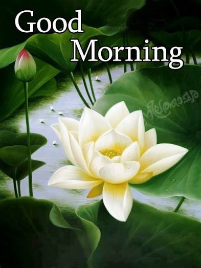 good morning031