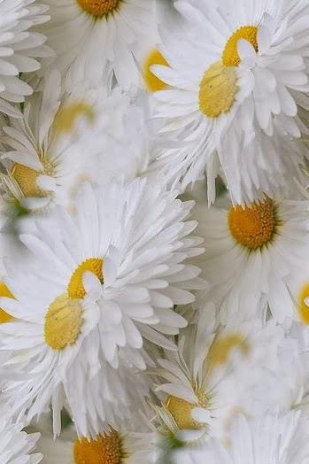 flower102_20130808_dimka angelova