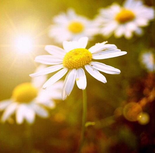 flower107_20131117_canness chong