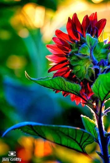 flower106_20131118_Eyüp Yemen