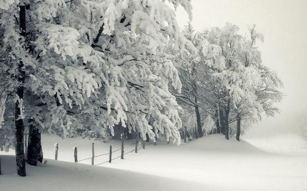 雪景001_20131130_Cicek Aliyeva