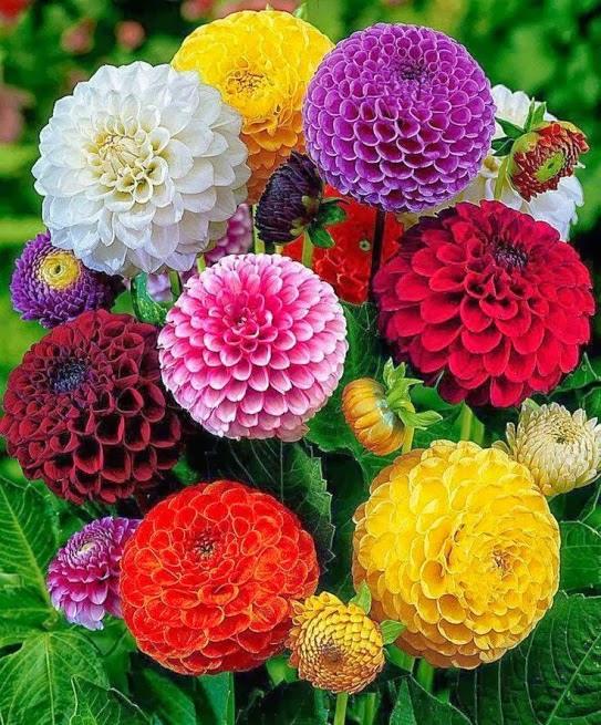 flower210_20131230_Pinar Cetin