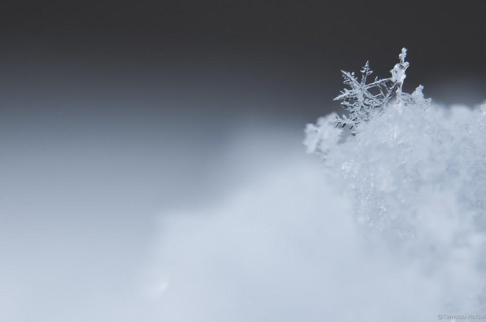 雪花 - 6