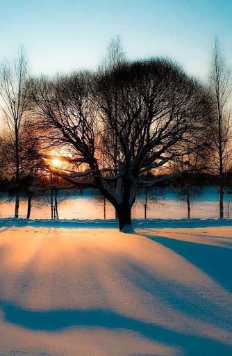 雪景026_20131218_Sasha Sinclair