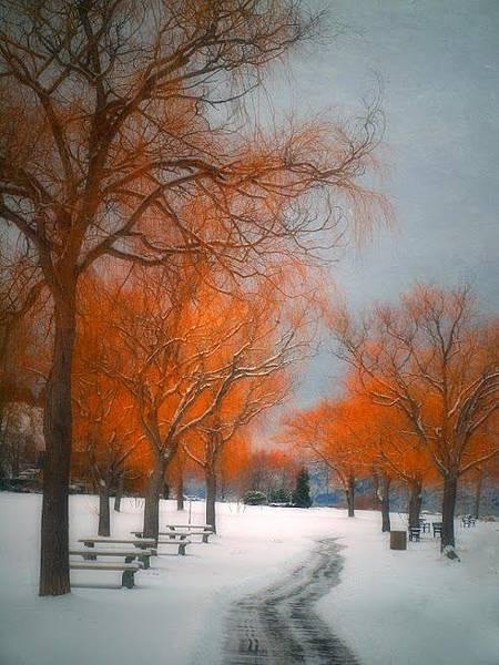 雪景031_20121223_Ali Kandemir