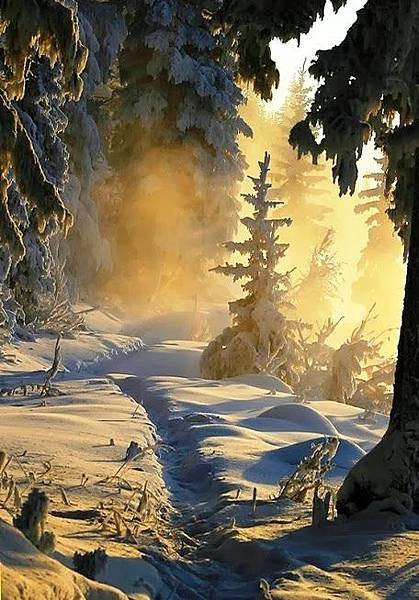 雪景034_20121225_Silvia ZK