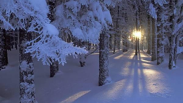 雪景032_20121223_Giuliano Di Buti