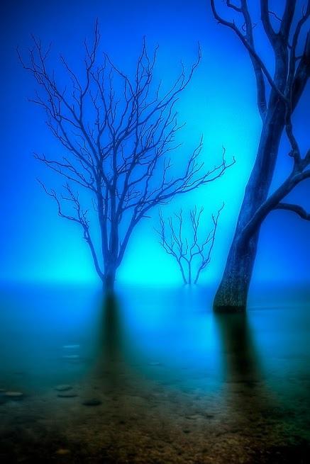奇樹121_20140101_Ali Kandemir