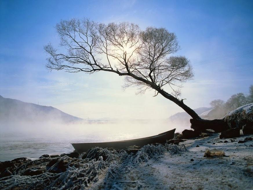 奇樹122_20140103_Allan Fox