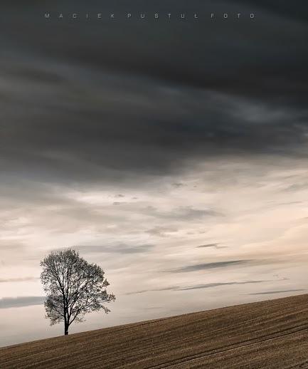奇樹2014-0001