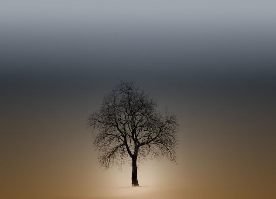 奇樹2014-0011