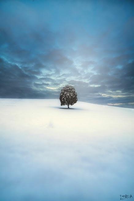 奇樹2014-0012