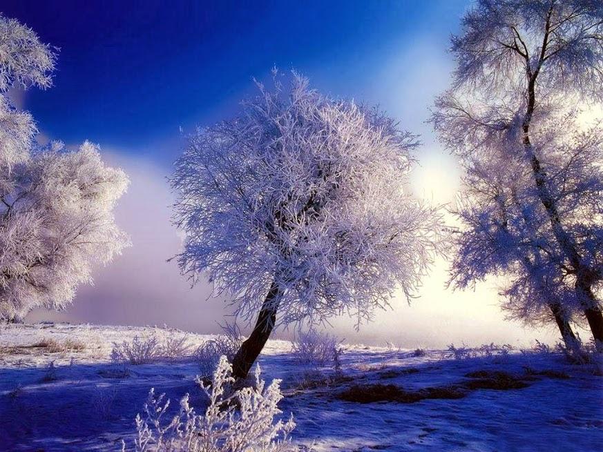 雪境2014-0007