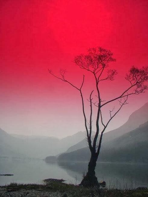 奇樹2014-0013
