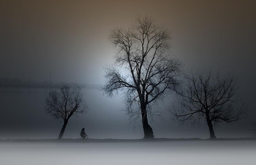 奇樹2014-0014