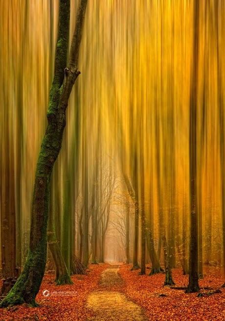 林間小徑2014-0002